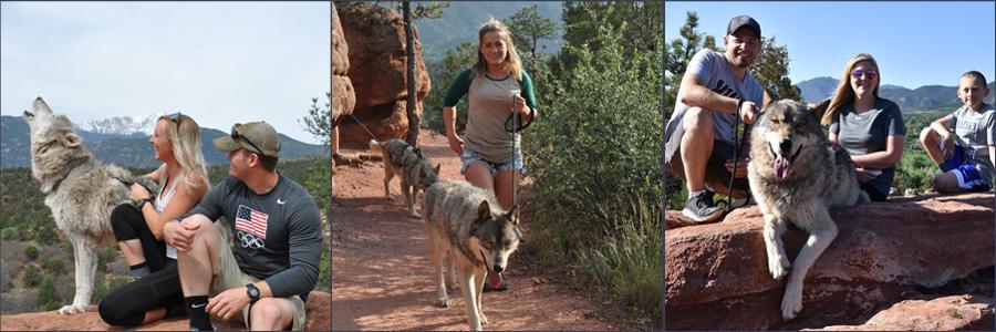 Wolf Walks Colorado Gift Certificate