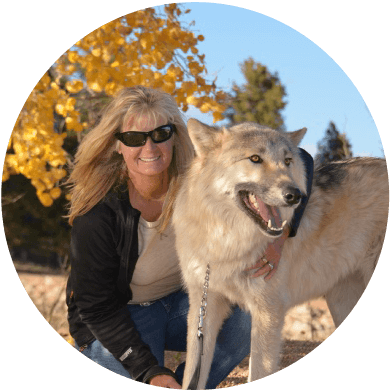 About Colorado Wolf Adventures Wolf Walks Wolf Photos Sightseeing