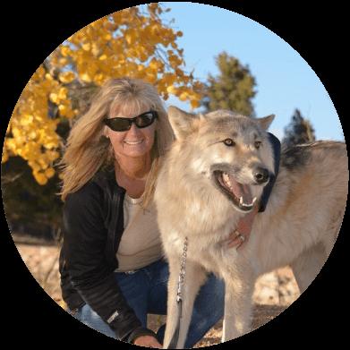 About Colorado Wolf Adventures Wolf Walks Wolf Photos Sightseeing